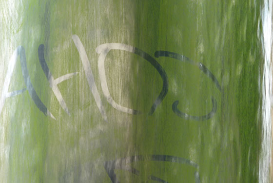 Algae writing